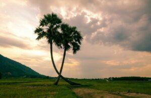 Puisi Bahasa Jawa Tentang Lingkungan