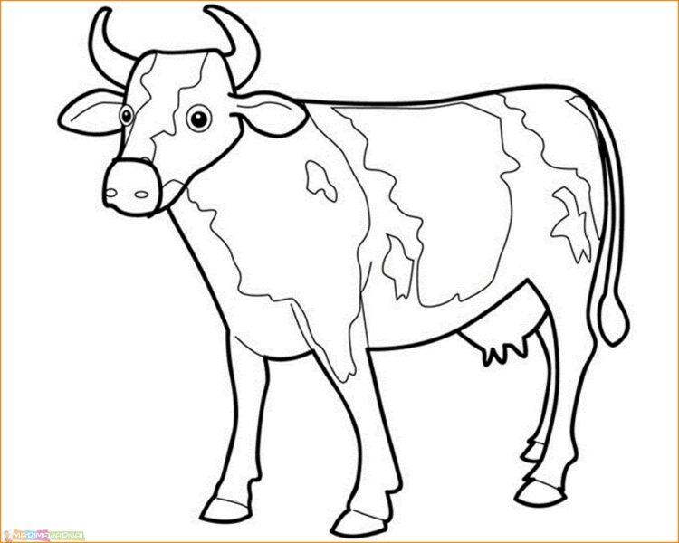 bentuk sketsa sapi