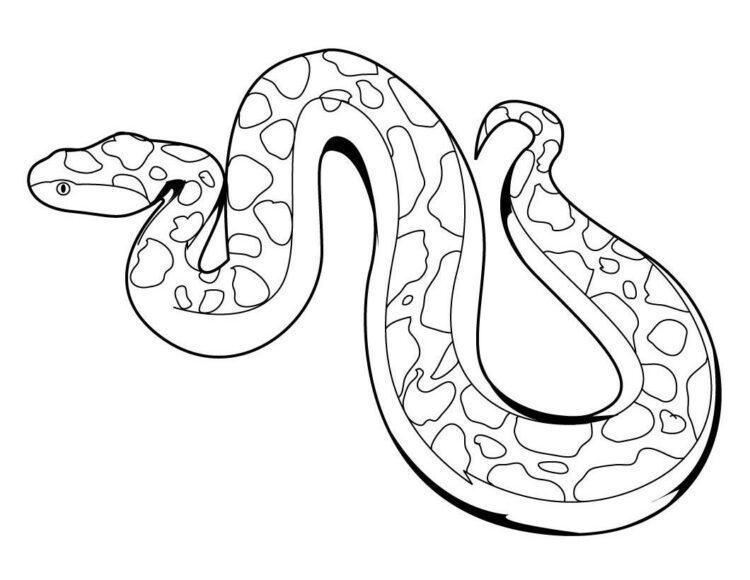 sketsa gambar ular