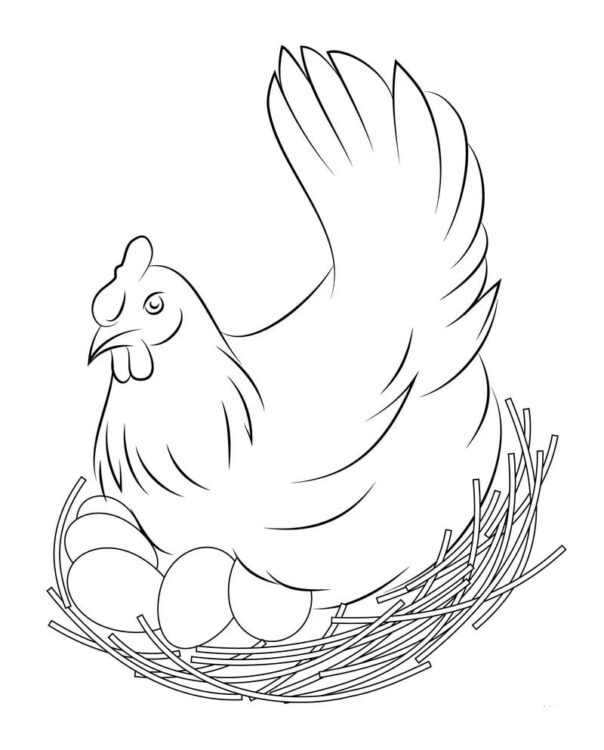 gambar sketsa hewan