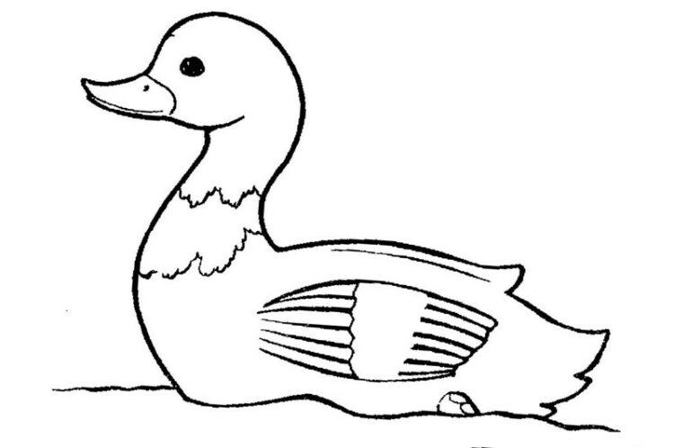 sketsa gambar bebek