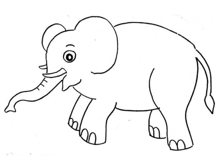 gambar sketsa gajah