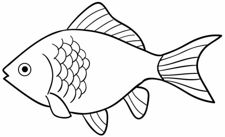sketsa ikan tawar