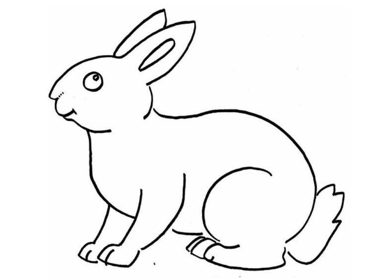 gambar kelinci mudah