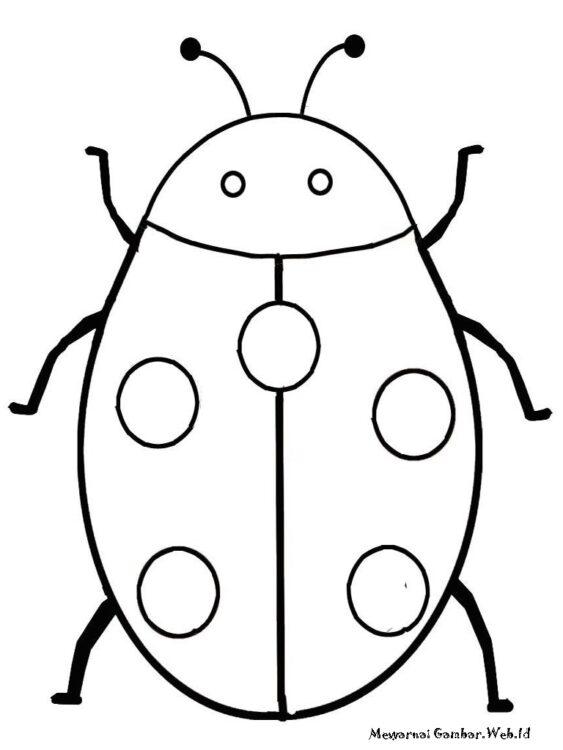 gambar sketsa kumbang biru