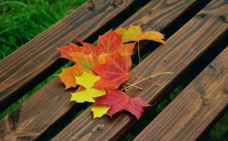 kerajinan dari daun kering