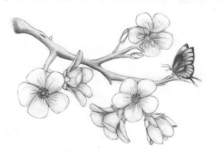 Sketsa Sakura Mudah dengan Pensil